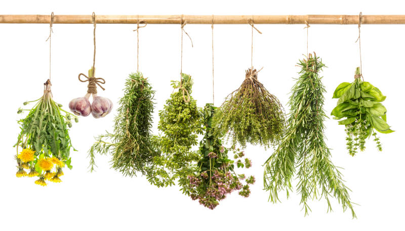 hanging bunches of fresh spicy herbs  herbal medicine - Remedy Roots