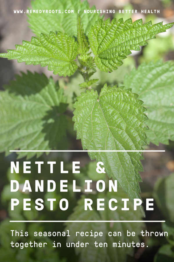 dandelion and nettle pesto recipe
